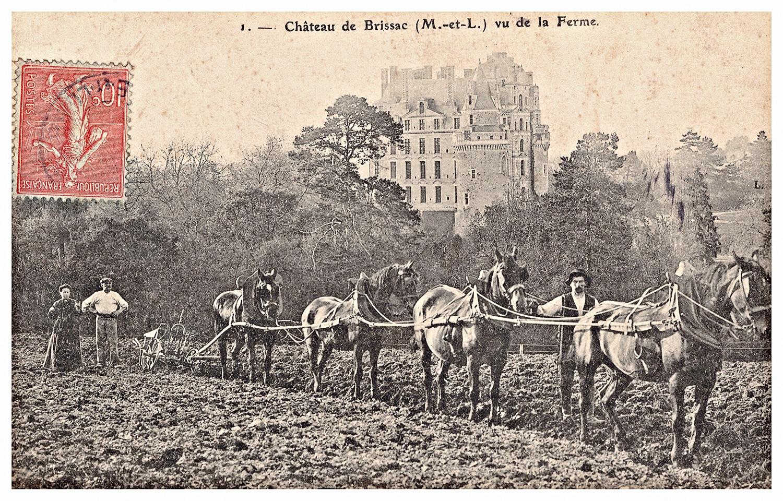 Château de Brissac vu de la ferme